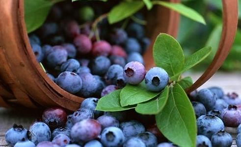 紫色水果有哪些 常吃紫色水果竟能排毒瘦身